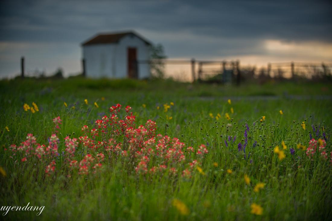 Wild flowers, barn and sunrise